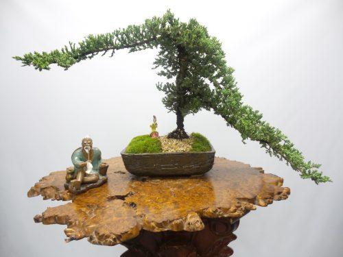 Địa chỉ bán cây bonsai mini uy tín trên địa bàn TP.HCM